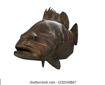 white grouper fish perspective view 3d render