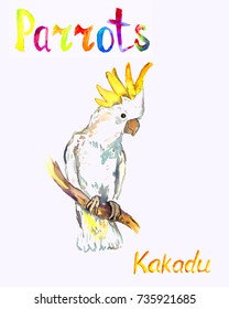 White Kakadu parrot sitting on branch, isolated hand painted watercolor illustration with handwritten inscription