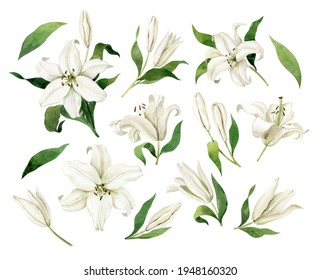 White lilies watercolor clipart set. Gentle white flowers isolated on white background. Clipart for greeting cards, wedding invitations, birthday cards, stationery.