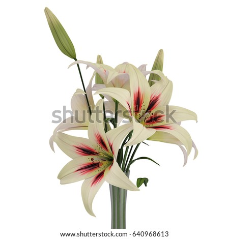White Lily Vase On White 3 D Stock Illustration 640968613 Shutterstock
