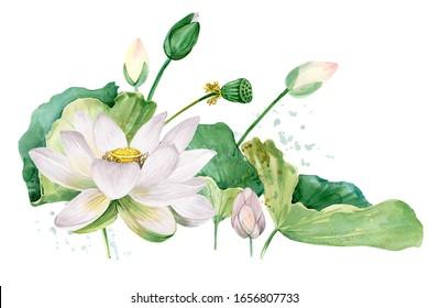 white lotus watercolor botanical illustration.