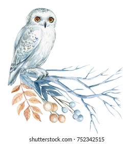 white owl on a branch, watercolor, christmas card