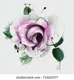 White and pink rose flowers isolated on white background. Colored pencils watercolor illustrations. With elements of the sketch and spray paint.