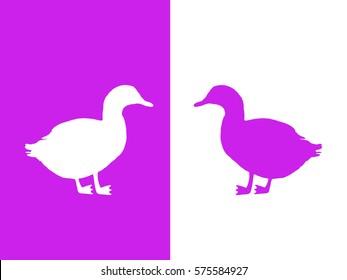 White and purple ducks