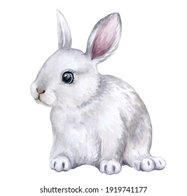 White Rabbit, bunny isolated on white background. Easter. Watercolor. Illustration. Hand drawing. Greeting card design.