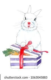 White rabbit opening a gift box full of carrots
