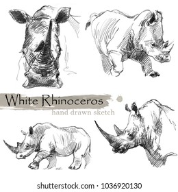 White Rhinoceros hand drawn sketch. Wild animal illustration.