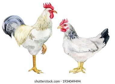 White rooster and chicken on white background, watercolor illustration