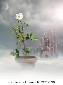 White rose in mist with heart palace in background