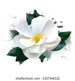 White rose watercolor style with spray paint elements, can be used as a greeting card