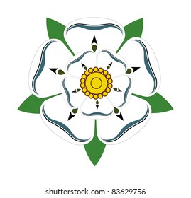 White Rose of Yorkshire isolated on plain background.
