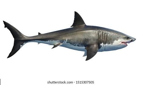 White shark marine predator big, side view. 3D rendering