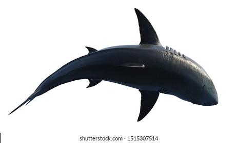White shark marine predator big swimming, top view. 3D rendering