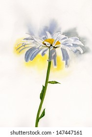 White Shasta Daisy.  Watercolor illustration of a white shasta daisy with shadows on the petals.