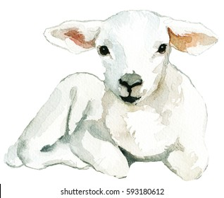 White Sheep Baby Lamb laying Watercolor  Isolated on White Background