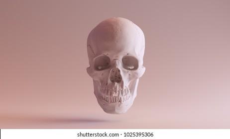 White Skull with Jaw Closed 3d illustration scsuvizlab CC Attribution