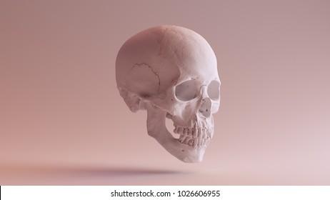 White Skull with Jaw Closed 3Q Right 3d illustration scsuvizlab CC Attribution