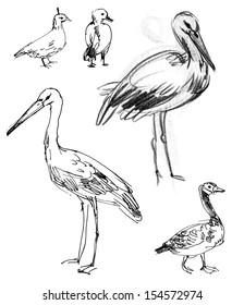 White Stork. Brant goose. Set. Hand-drawn