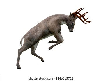 white tailed deer attack, isolated on white background, 3d illustration
