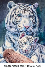 White tiger. Mom and baby. Big cat