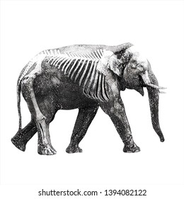 wild animal hand drawing illustration