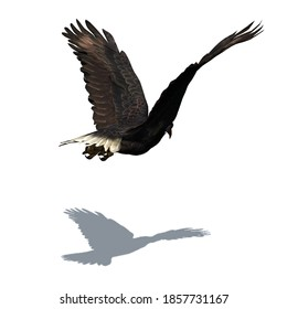 Wild animals - eagle with shadow on the floor - isolated on white background - 3D-illustration