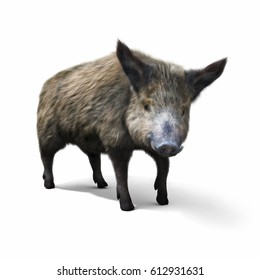 Wild boar isolated on a white background. 3d rendering