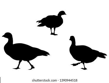 Wild ducks flock on white background