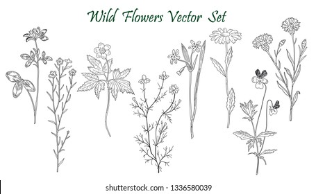 Wild Flowers isolated sketch hand drawn illustration. Detailed botanical sketch for tea, organic cosmetic, medicine, aromatherapy. Black and white. Raster copy.