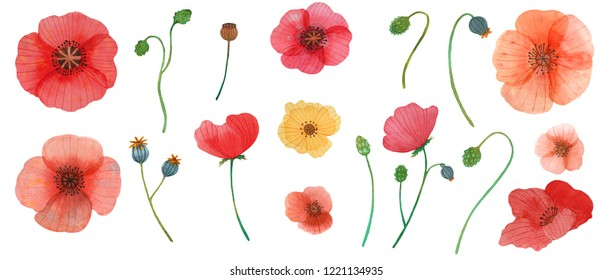 wild flowers poppy watercolor pattern illustration seamless