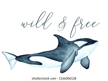 Wild and free quote slogan. Killer whale watercolor illustration isolated. Big wild underwater animal blue black watercolor orca whale painting. Mammal oceanic water animal orca killer swimming.