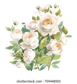 Wild garden roses. Watercolor floral illustration. Botanical decorative element. Flower concept. Botanica concept.