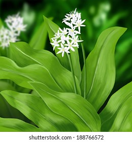 wild garlic herb on hand drawing