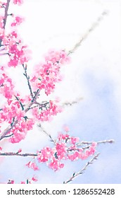 wild himalayan cherry on blue sky in Doi Ang Khang Chiang Mai Thailand with watercolor