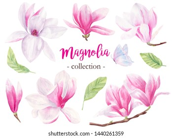 Wild magnolia hand drawn watercolor raster illustrations set. Blooming flowers isolated pack. Gentle flying butterfly. Petals and buds pastel aquarelle drawing. Beautiful orchid graphic design element
