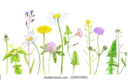 Wildflower Bouquet Drawing High Res Stock Images Shutterstock