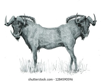 Wildebeest monster. Gnu with with two heads. Fantasy creature drawing.