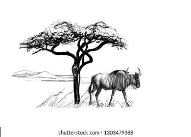 Wildebeest near a tree in africa. Hand drawn illustration. Collection of hand drawn illustrations (originals, no tracing)
