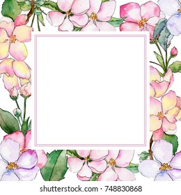 Wildflower of apple flower frame in a watercolor style. Full name of the plant: flowers of apple. Aquarelle wild flower for background, texture, wrapper pattern, frame or border.