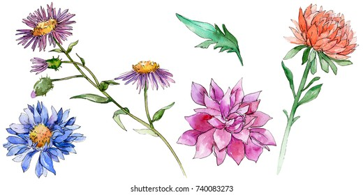 Wildflower chrysantemum flower in a watercolor style isolated. Full name of the plant: chrysantemum, golden-daisy. Aquarelle wild flower for background, texture, wrapper pattern, frame or border.