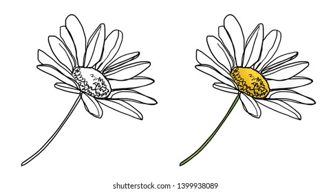 Wildflower Daisy flower digital painting