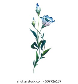 Wildflower Eustoma flower in a watercolor style isolated. Full name of the plant: Eustoma russellianum gevuldbloemig. Aquarelle wild flower for background, texture, wrapper pattern, frame or border.