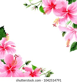 Wildflower hibiscus pink flower frame in a watercolor style. Full name of the plant: hibiscus. Aquarelle wild flower for background, texture, wrapper pattern, frame or border.