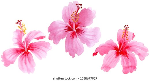 Wildflower hibiscus pink flower in a watercolor style isolated. Full name of the plant: hibiscus. Aquarelle wild flower for background, texture, wrapper pattern, frame or border.