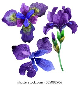 Wildflower iris flower in a watercolor style isolated. Full name of the plant: purple iris. Aquarelle wild flower for background, texture, wrapper pattern, frame or border.