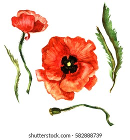 Watercolor poppies images stock photos vectors shutterstock wildflower poppy flower in a watercolor style isolated full name of the plant poppy mightylinksfo
