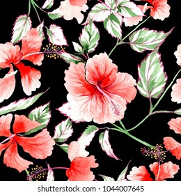 Wildflower rose flower pattern in a watercolor style. Full name of the plant: rose, rosa, hulthemia. Aquarelle wild flower for background, texture, wrapper pattern, frame or border.