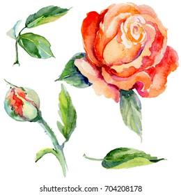 Aquarelle Rose Images Stock Photos Vectors Shutterstock