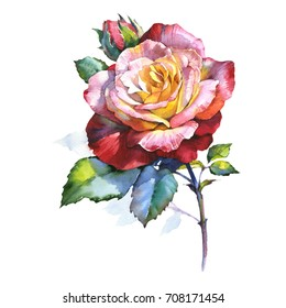 Wildflower rose flower in a watercolor style isolated. Full name of the plant: rosa. Aquarelle wild flower for background, texture, wrapper pattern, frame or border.
