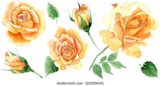 Wildflower yellow tea-hybrid roses flower in a watercolor style isolated. Full name of the plant: hulthemia, rosa. Aquarelle wild flower for background, texture, wrapper pattern, frame or border.